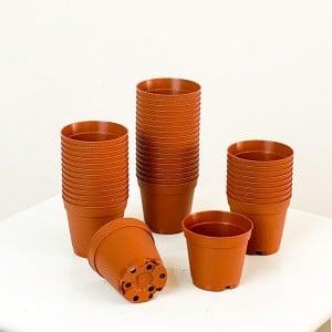 Fidan Burada - 5.5 cm Kaktüs ve Sukulent Yetiştirme Saksısı 30 Adet Kahverengi