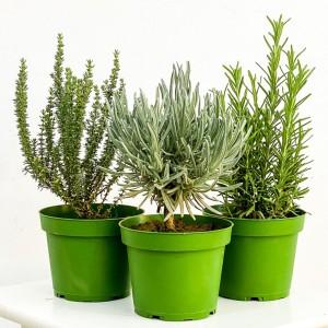 Fidan Burada - Aromatik Mutfak Bitkileri Seti Lavanta - Biberiye - Kekik