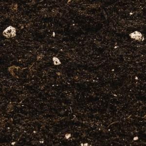 Compo Sana Genel Kullanım Saksı Toprağı 10 Lt - Thumbnail