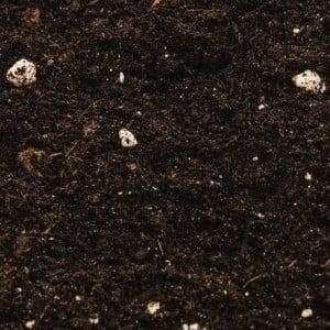 Compo Sana Genel Kullanım Saksı Toprağı 5 Lt - Thumbnail
