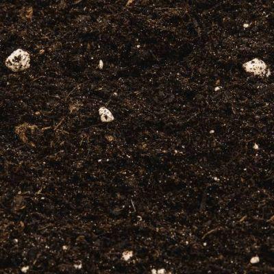 Compo Sana Genel Kullanım Saksı Toprağı 5 Lt