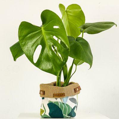 Deve Tabanı Bitkisi - Yaprak Desenli Plant Basket 30-40cm