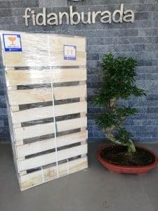 Ficus S Bonsai 100 Cm - Thumbnail