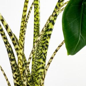 Fil Kulağı Bitkisi-Alocasia Zebrina 100-120cm - Thumbnail