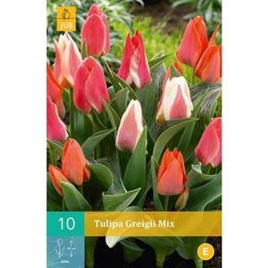 Greigii Karışık Renkli Lale Soğanı-İthal-10 Adet - Thumbnail
