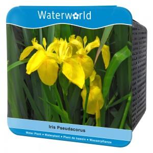 Fidan Burada - İris Pseudacorus - Sarı İris Çiçeği Seti