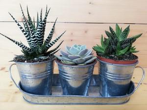 Fidan Burada - Kaktüs Seti-Tricolor-Galvaniz Kova Temalı Üçlü set