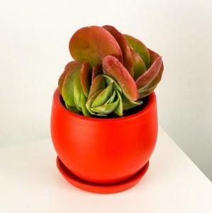 Fidan Burada - Kalanchoe Tetraphylla - Curvy Terra Cotta Kırmızı Saksılı