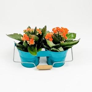 Fidan Burada - Mavi Dekoratif Saksılı Kalanşo Çiçeği