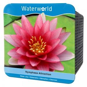 Water World - Nymphaea Attraction-Kırmızı Nilüfer Çiçeği Seti