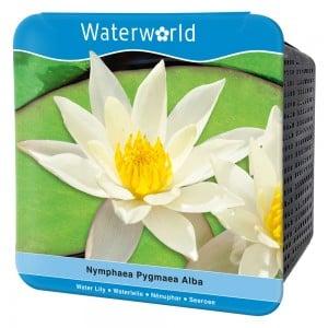 Water World - Nymphaea Pygmaea Alba -Beyaz Cüce Nilüfer Çiçeği Seti
