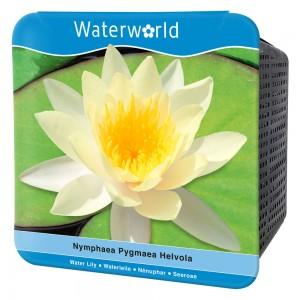 Water World - Nymphaea Pygmaea Helvola-Sarı Cüce Nilüfer Çiçeği Seti