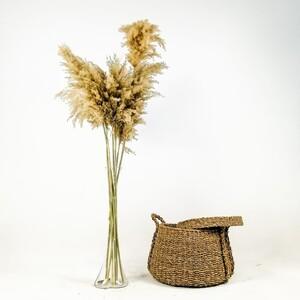 Fidan Burada - Pampas Cam Vazolu - Naturel 10'lu Kuru Çiçek - 120cm
