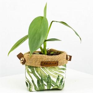 Fidan Burada - Phildendrom Silver Sword-Plant Basket Saksılı