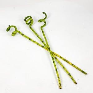 Fidan Burada - Şans Bambusu Seti - Küçük Dracaena Lucky Bamboo