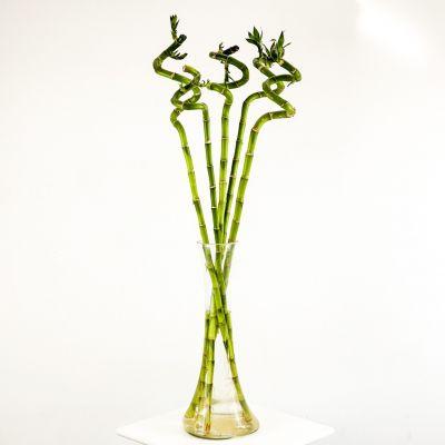 Şans Bambusu Vazolu Set 5'li